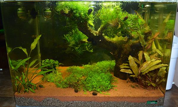 Quelles plantes pour mettre sur une racine for Racine aquarium