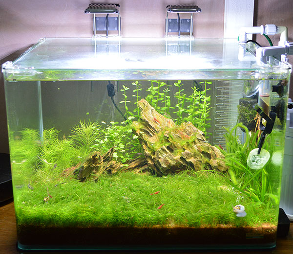 Re: Nouvel aquarium Scapers Tank 50 L le Mer 27 Ao? 2014 - 17:10