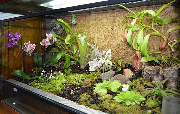 plantes carnivores le terrarium. Black Bedroom Furniture Sets. Home Design Ideas