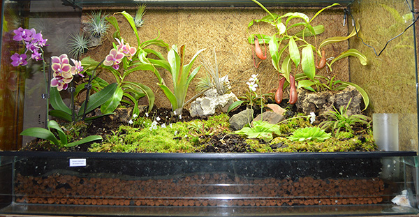 mon terrarium tillandsias et plantes diverses forums de gammvert. Black Bedroom Furniture Sets. Home Design Ideas
