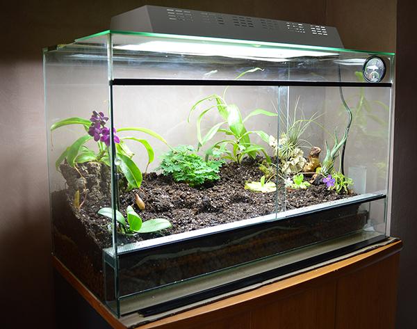 plante carnivore aquarium
